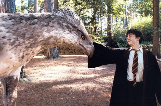 Le retour d'Harry Potter ?