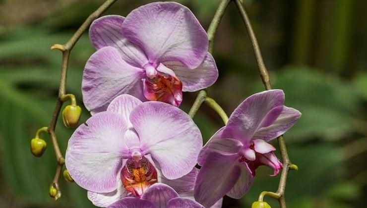 astuces pour entretenir une orchid e phalaenopsis axonpost. Black Bedroom Furniture Sets. Home Design Ideas