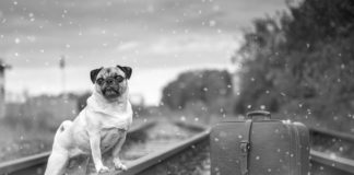 voyage train avec animaux